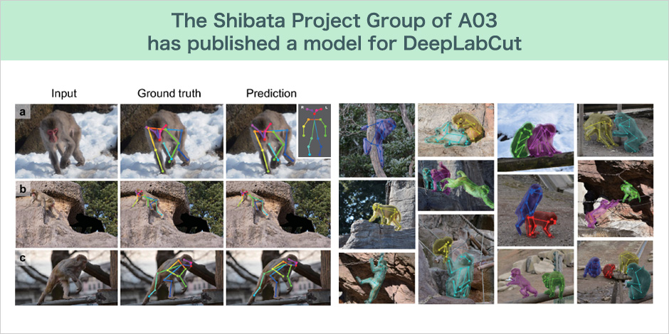 The Shibata Project Group of A03 has published a model for DeepLabCut